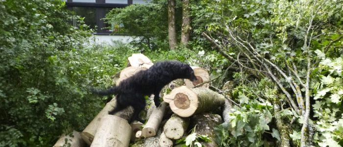 Gefahrenholz