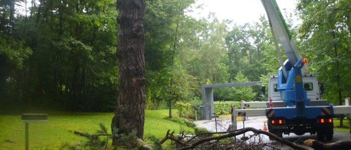 Gefahrenholzentnahme Feldafing