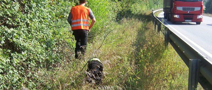 Einsatz Spurhund bei ALB Suche