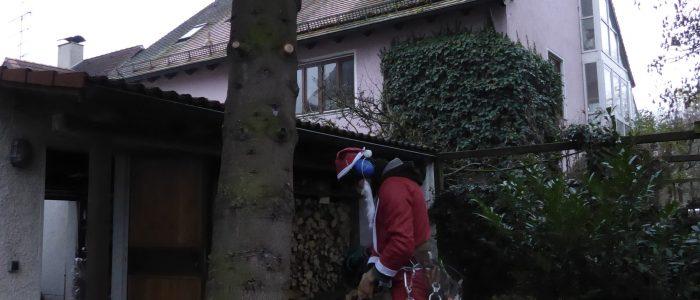 Weihnachtsmann an Weisstanne