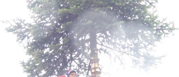 Hl. Nikolaus mit Weihnachtsbaum