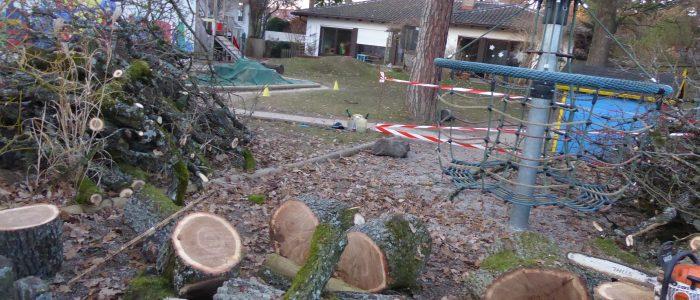Quercus robur Vaterstetten