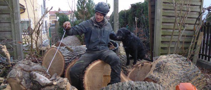 Baumkontrolle Quercus
