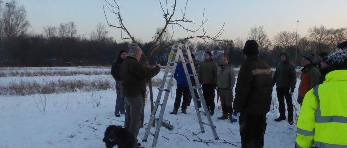 Praktische Komponente Obstbaumschnittkurs
