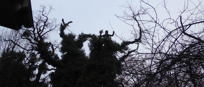 Gefahrenbaum