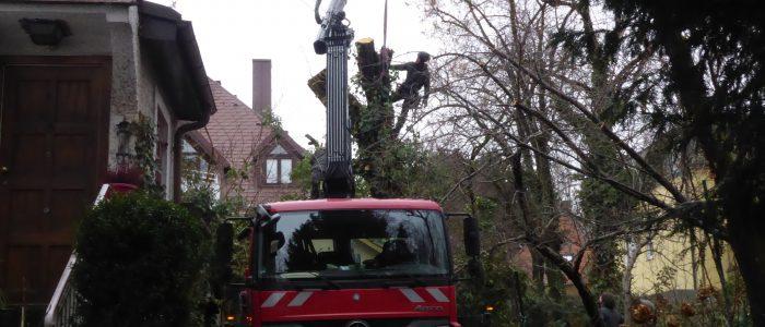 LKW im Einsatz bei Baumfällung