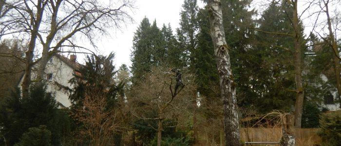 Klettereinsatz ohne Leiter an Obstbaum