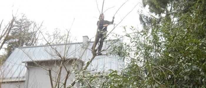 Förderung der Autarkie in Grünwald durch Förderung der obsttragenden Bäume