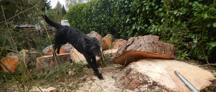 sportlicher Mudihund bei Weitsprung