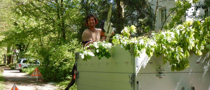 Beseitigung Astwerk und Vorbereitung zur nachhaltigen Nutzung