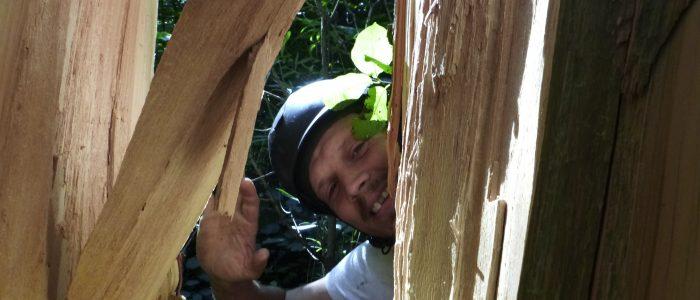 Test der Holzqualität