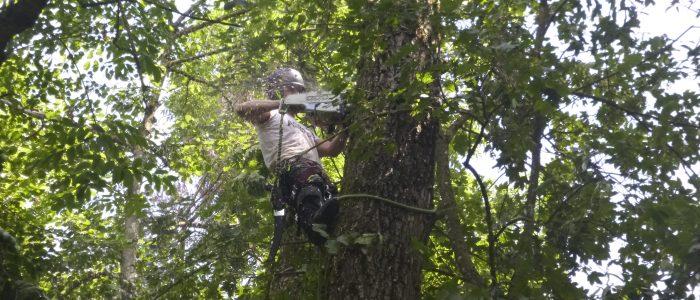 Salix wird abgetragen