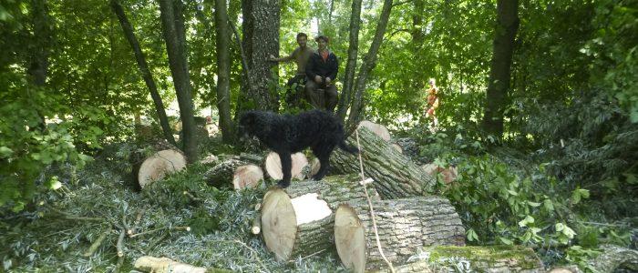 mehrere Festmeter beste Holzqualität