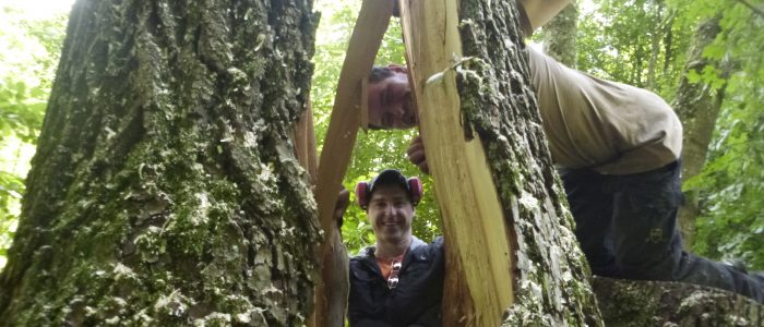 Zugversuch an Salix