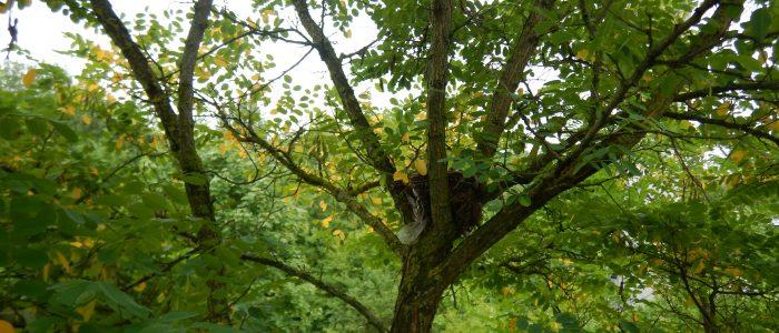 Habitatbaum
