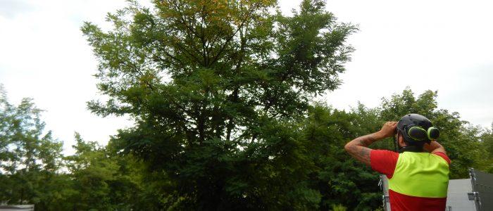 Qualifizierte Inaugenscheinnahme des Baumes
