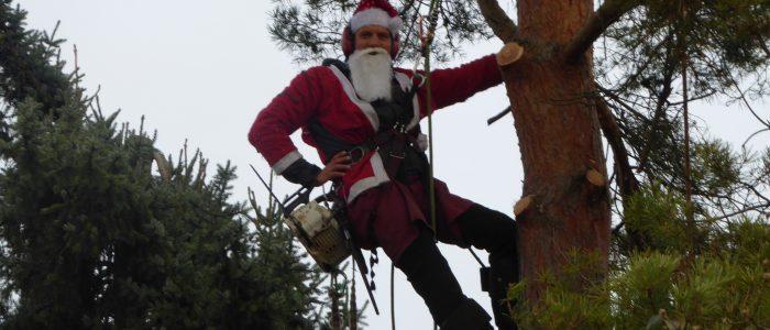 Nikolaus auf Pinus sylvestris