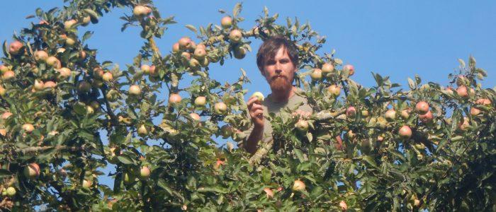 Apfelmahlzeit
