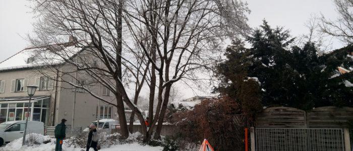Absperreinrichtung Schneebruch