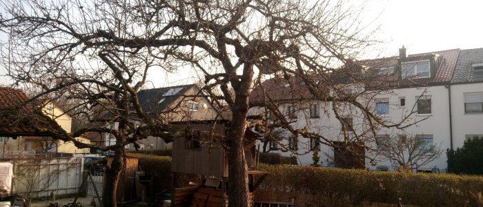 KZ3  vor dem Obstbaumschnitt