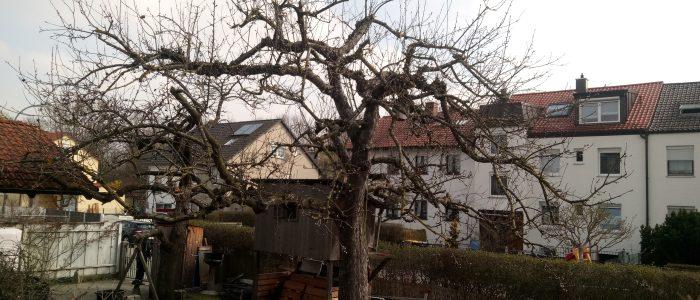 KZ3  nach dem Obstbaumschnitt