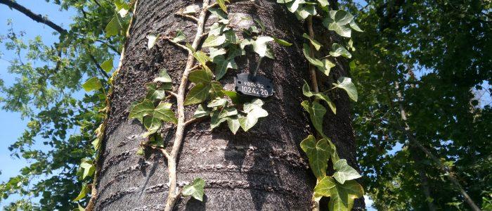 Arbo Tag Baumplakette