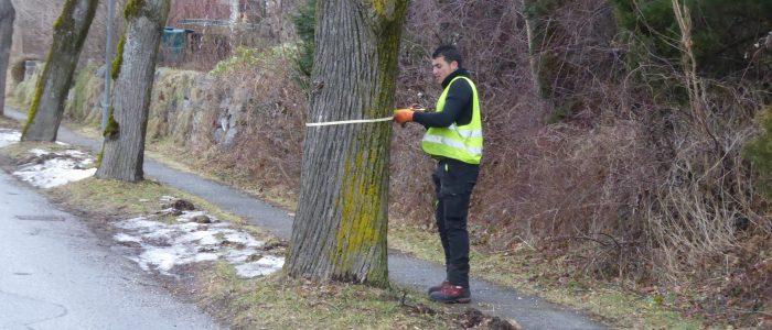 Ermittlung der Baumdaten