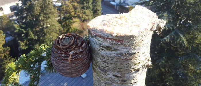 Baumfällung Spitze