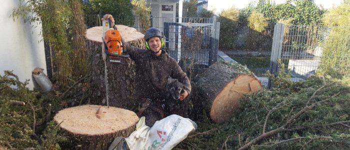 Baumfällung sicher abgeschlossen