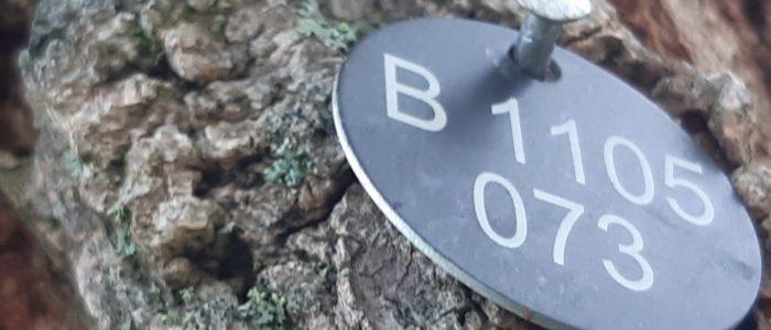 Baummarkierung Alu