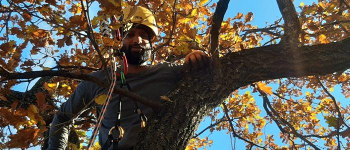 SKT in der Baumpflege