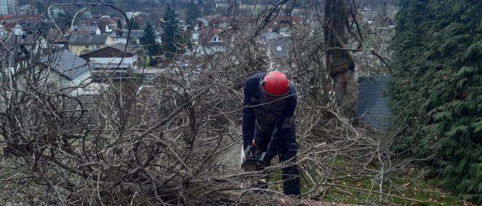Einsatz Bodenpersonal in der Baumpflege