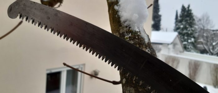 Baumschnitt an Kopfbaum