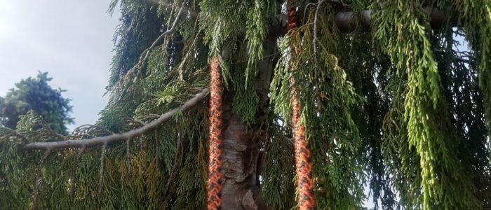 Doppelseiltechnik-in-Baum