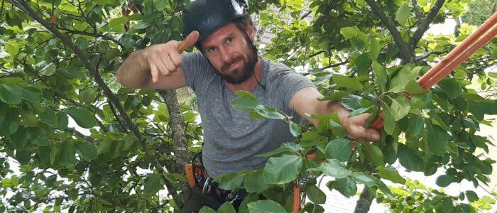 Murnau-Baumschnitt